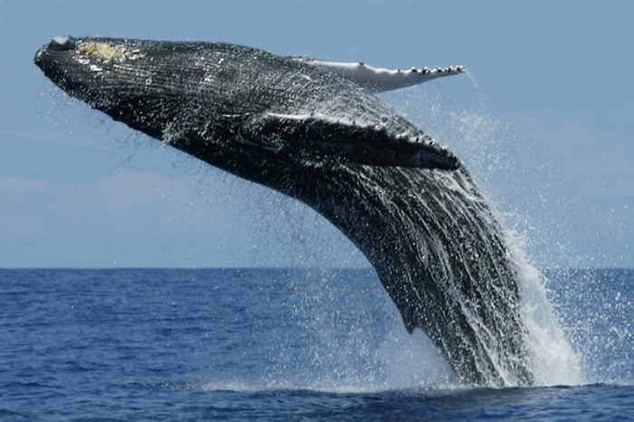 Luxury Whale Watching